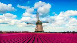 Find cheap flights from Newfoundland and Labrador to the Netherlands