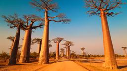 Find cheap flights from Toronto Island to Madagascar